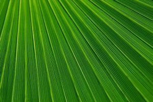 avocado colore: immagine completamente verde